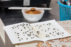 Flies caught on white sticky paper trap Stock Photo