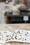 Flies caught on white sticky  paper trap Stock Photography