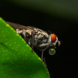 Flies cause diseases royalty free stock images