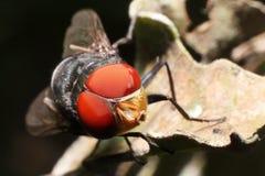 Flies Stock Photos