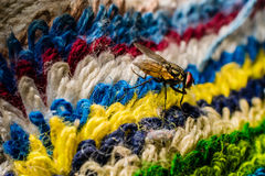 Flies Colorful Royalty Free Stock Photography
