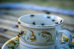 Flies on the cup. Flies swarming on the dirty tea cup royalty free stock image