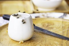 The flies that are feeding on the white Cup is placed on a wooden tray royalty free stock images