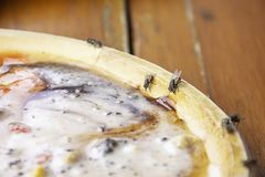 The flies that are feeding on a wooden tray royalty free stock photo