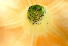 Flies in the flower Stock Photo