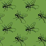 Flies on green background Royalty Free Stock Photography