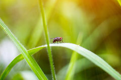 Flies on green grass. Back ground royalty free stock photos