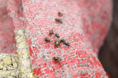 Flies Royalty Free Stock Images