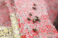 Flies Stock Image