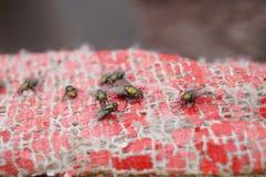 Flies Stock Photography