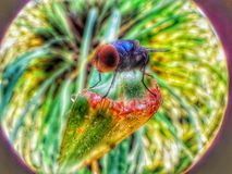 Flies model macro royalty free stock photos