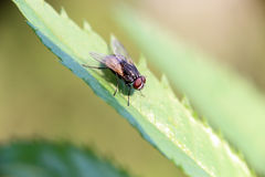 The flies in morning Stock Images