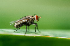 Flies Stock Photo