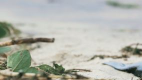Flies on polluted coast, garbage on dirty sandy ocean shore, abandoned beach. Stock footage stock video footage