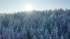 Flies slow against the sun above epic snowy forest in cold winter landscape stock footage