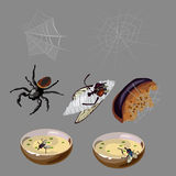 Flies, spiders, rotten food and insects Stock Images