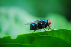 Flies Royalty Free Stock Photography