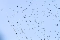 Flies on the web. Flies trapped in a web against the blue sky stock image