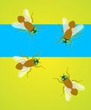 Flies Vector Royalty Free Stock Image