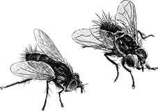Flies Stock Photography