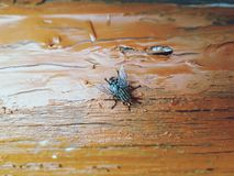 Flies. On the wood texture royalty free stock photo