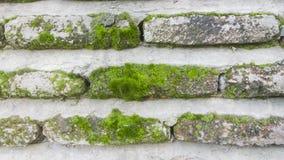 Fliesen des alten Ziegelsteines mit Moos Lizenzfreies Stockbild