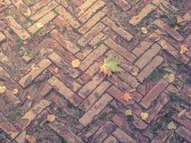 Fliesen des dekorativen Steins Alte Beschaffenheit mit Herbstlaub Stockbild