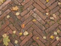 Fliesen des dekorativen Steins Alte Beschaffenheit mit Herbstlaub Lizenzfreies Stockbild