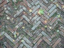 Fliesen des dekorativen Steins Alte Beschaffenheit mit Herbstlaub Lizenzfreie Stockbilder