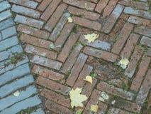 Fliesen des dekorativen Steins Alte Beschaffenheit mit Herbstlaub Stockbilder