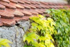 Fliesennahaufnahme mit Blättern lizenzfreies stockfoto