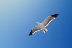 Flight. The sea gull that flew over the sky from the pier Stock Image