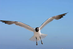 In Flight Royalty Free Stock Image
