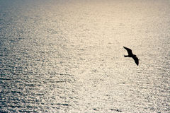 The Flight. Of a sea gull against a sunset sea Royalty Free Stock Photo