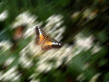 In Flight. A butterfly suspened in motion above a moving background Royalty Free Stock Image