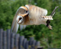 In Flight Royalty Free Stock Images