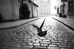 In flight. Uchwycogy pigeon in the alley Royalty Free Stock Image