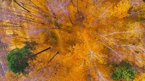 A flight above an autumnal forest. Golden Fall aerial video. A flight above an autumn forest. Yellow and orange leaves stock footage