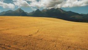 Flight above beautiful rural autumn landscape stock footage