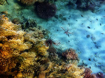 Flight above corals Royalty Free Stock Photos