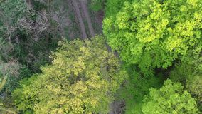 Flight above forest road during spring season, drone top down view, 4K. Flight above forest path during spring season, late afternoon sunlight, drone camera in stock video footage