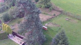 Flight around tree stock video footage