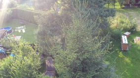 Flight around tree stock footage