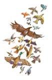 Flight of birds Stock Photography