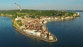 Flight with birds over old city Piran, aerial panoramic view with old houses, roofs, St. George`s Parish Church and fortress. stock video footage