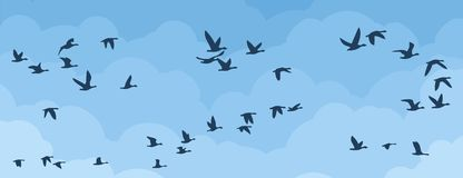 Flight of birds in the sky. A background with flight of birds in clouds Royalty Free Stock Image