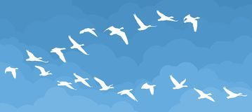 Flight of birds in the sky. Royalty Free Stock Photography