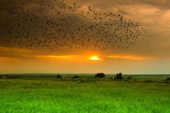 The flight of birds at sunset Stock Images