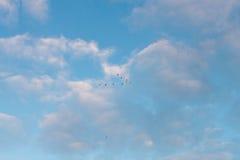Flight of birds Stock Images