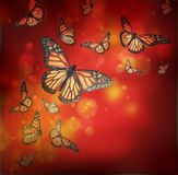 Flight of butterflies Royalty Free Stock Image